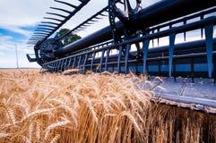 Сбор x пшеницы Стоковая Фотография