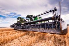 Сбор пшеницы Стоковое Изображение