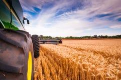 Сбор пшеницы Стоковые Фото