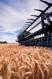 Сбор пшеницы Стоковая Фотография