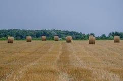 Сбор пшеницы Стоковые Изображения RF