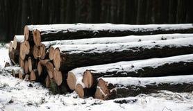 Сбор древесины в зиме Стоковая Фотография RF