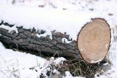 Сбор древесины в зиме Стоковое Изображение