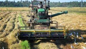 Сбор риса Стоковые Изображения RF
