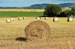 Сбор: Связка сена, осень, Aberdeenshire, Шотландия стоковое фото rf