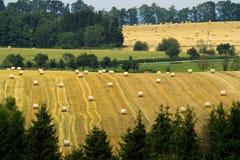 Сбор сена в лете Стоковые Фото