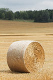 Сбор сена фермы Стоковая Фотография RF