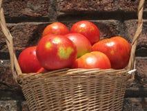 Сбор томатов Стоковое Фото