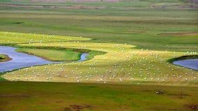 Сбор травы на зима в Исландии Стоковая Фотография RF