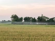 Сбор тропической страны поля риса готовый Стоковые Изображения