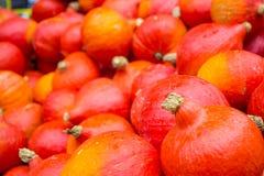 Сбор тыквы в осени стоковое фото rf