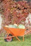 Сбор тыквы осени стоковое изображение rf