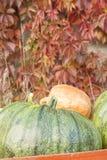 Сбор тыквы осени стоковые фото