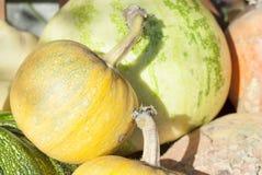 Сбор тыквы осени стоковая фотография