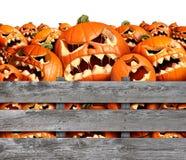 Сбор тыквы хеллоуина Стоковая Фотография RF