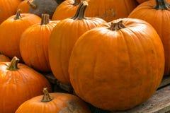 Сбор тыкв на хеллоуин Стоковое Изображение