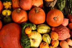Сбор тыкв на хеллоуин Стоковые Фотографии RF