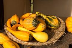 Сбор тыкв на хеллоуин Стоковое фото RF
