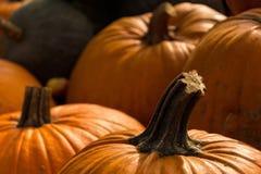 Сбор тыкв на хеллоуин Стоковое Изображение RF