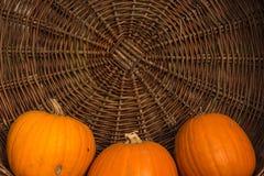 Сбор тыкв на хеллоуин Стоковые Изображения