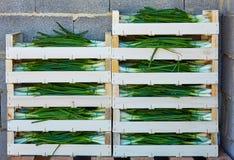 Сбор лука штабелированный в деревянных коробках корзины Стоковые Фотографии RF