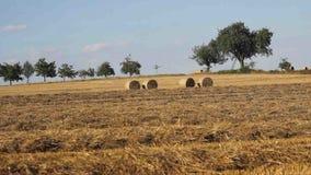 Сбор урожая зерна в поздним летом сток-видео
