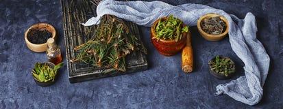 Сбор целебной травы Стоковые Фото