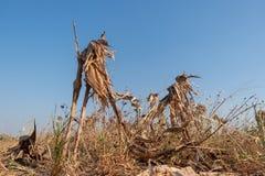 Сбор afrer кукурузных полей в небе захода солнца Стоковое фото RF