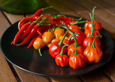 Сбор Chili осени Стоковое Изображение RF