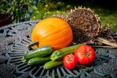 Сбор veg сада Стоковые Фото