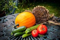 Сбор veg сада Стоковые Изображения RF