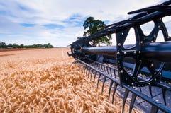 Сбор VI пшеницы Стоковое Изображение