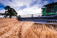 Сбор XI пшеницы Стоковое Изображение
