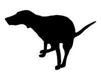 сброс собаки имея Стоковая Фотография RF