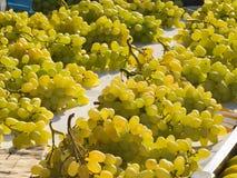 сбывание виноградин стенда Стоковые Фото