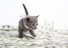 сбывание котят стоковые фото