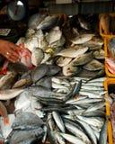 сбывание рыб свежее Стоковая Фотография
