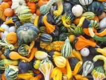сбывание gourds Стоковые Изображения