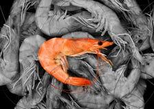 Сваренные свежие креветки, испаренная креветка, конспект морепродуктов стоковое изображение rf