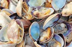 сваренные clams Стоковые Фотографии RF