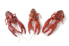 сваренные crayfishes пресноводные Стоковые Изображения RF