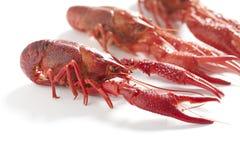 сваренные crayfishes пресноводные Стоковые Фото