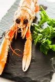 Сваренные crayfish Стоковое Изображение RF