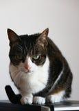 Сварливый крытый кот стоя на случае компьютера Стоковое Фото