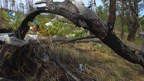 Свалка мусора в лесе, загрязнение окружающей среды, лес, деревья видеоматериал