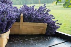 Свежая лаванда в корзине Стоковое Изображение