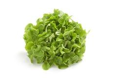 свежая белизна салата Стоковое Фото