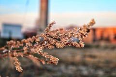 Свежая весна в городке стоковые фотографии rf