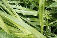 свежая весна зеленого цвета травы здоровая Стоковое Фото