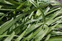 свежая весна зеленого цвета травы здоровая Стоковое фото RF